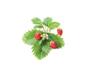 SG-005 - Click and Grow Smart Garden Refill 3-pack - Wild Strawberry